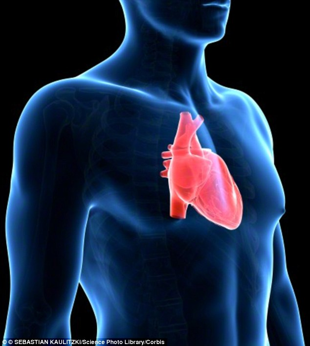 The heart is on the left hand side of the body due to evolution. Dr Rajay Narain, a research cardiologist, explained: