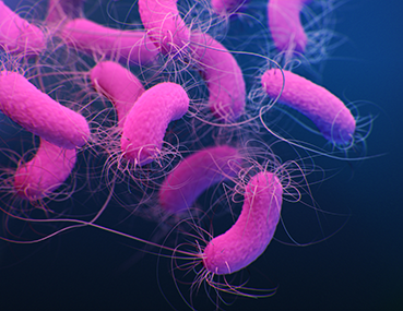 Pseudomonas aeruginosa can cause infections in patients in hospitals.