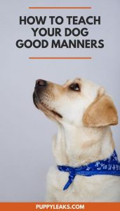 Does your dog have bad manners? Here